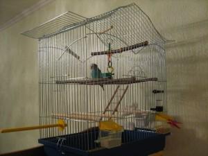 Какую клетку для попугая выбрать?